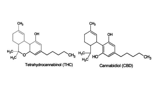 Dessins de molécules de THC et de CBD