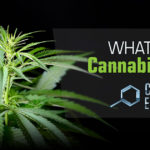 What is Cannabidiol? The Chemistry of CBD