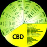 Que sont les cannabinoïdes? THC, CBD et CBN expliqués