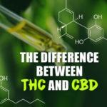 Quelle est la différence entre le CBD et le THC? [Explained]