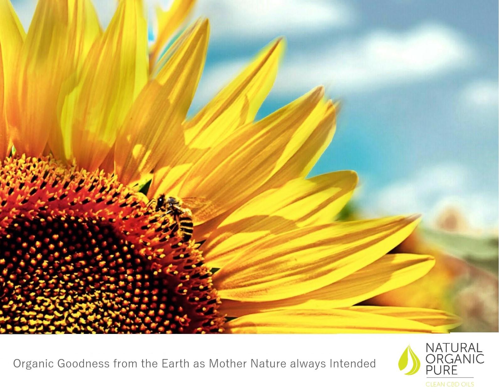 huiles de cdb par | huiles naturelles pures bio propres | strapline de bonté organique naturelle | tournesol avec abeille