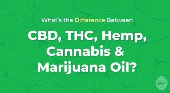 cbd thc cannabis huile de marijuana