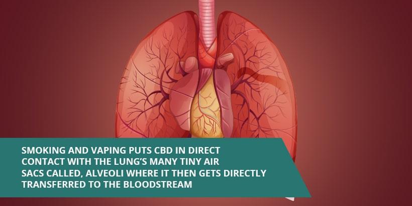"""vaping-and-the-lungs """"width ="""" 820 """"height ="""" 411 """"srcset ="""" https://www.cannainsider.com/reviews/wp-content/uploads/sites/2/2019/04/vaping-and -the-lungs.jpg 820w, https://www.cannainsider.com/reviews/wp-content/uploads/sites/2/2019/04/vaping-and-the-lungs-300x150.jpg 300w, https: / /www.cannainsider.com/reviews/wp-content/uploads/sites/2/2019/04/vaping-and-the-lungs-768x385.jpg 768w, https://www.cannainsider.com/reviews/wp- content / uploads / sites / 2/2019/04 / vaping-and-the-lungs-60x30.jpg 60w """"tailles ="""" (largeur max: 820px) 100vw, 820px """"/></p></noscript><p>En règle générale, les effets de cette méthode d'administration prennent environ 5 à 10 minutes à ressentir.</p><p><strong>Mais avant de fumer une fleur de chanvre riche en CBD, pensez à ceci…</strong></p><h2>Risques associés au tabagisme CBD</h2><p>Presque tout le monde est d'accord, fumer de la fleur de chanvre vous expose presque certainement à moins de cancérogènes cancérigènes que de fumer des cigarettes.</p><p>Mais cela ne signifie pas qu'il n'y a aucun risque pour la santé.</p><p>Toute fumée est nocive pour vos poumons, qu'elle provienne d'une cigarette, d'une fleur de chanvre ou d'un feu de camp.</p><p>La fumée irrite les poumons et, selon les produits chimiques présents et la fréquence d'exposition, elle peut également augmenter le risque de bronchite chronique, de pneumonie, de cancer et de maladie pulmonaire.</p><p><strong>Ce qui peut vous amener à demander ..</strong></p><h2>Vaper est-il plus sûr que fumer?</h2><p>Bref, oui, en général. Mais n'oubliez pas, quelle que soit la façon dont vous choisissez de consommer du CBD, la sécurité de votre produit sera directement liée à la qualité de celui-ci.</p><p>En général, vapoter du CBD vous permet d'éviter les cancérogènes nocifs associés au tabagisme, mais les produits à base de CBD de faible qualité peuvent contenir des propulseurs et des diluants nocifs. C'est pourquoi il est important de toujours acheter des produits de la plus haute qualité lor"""