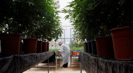 Cannabis d'entreprise - Page 2 - US Hemp Co