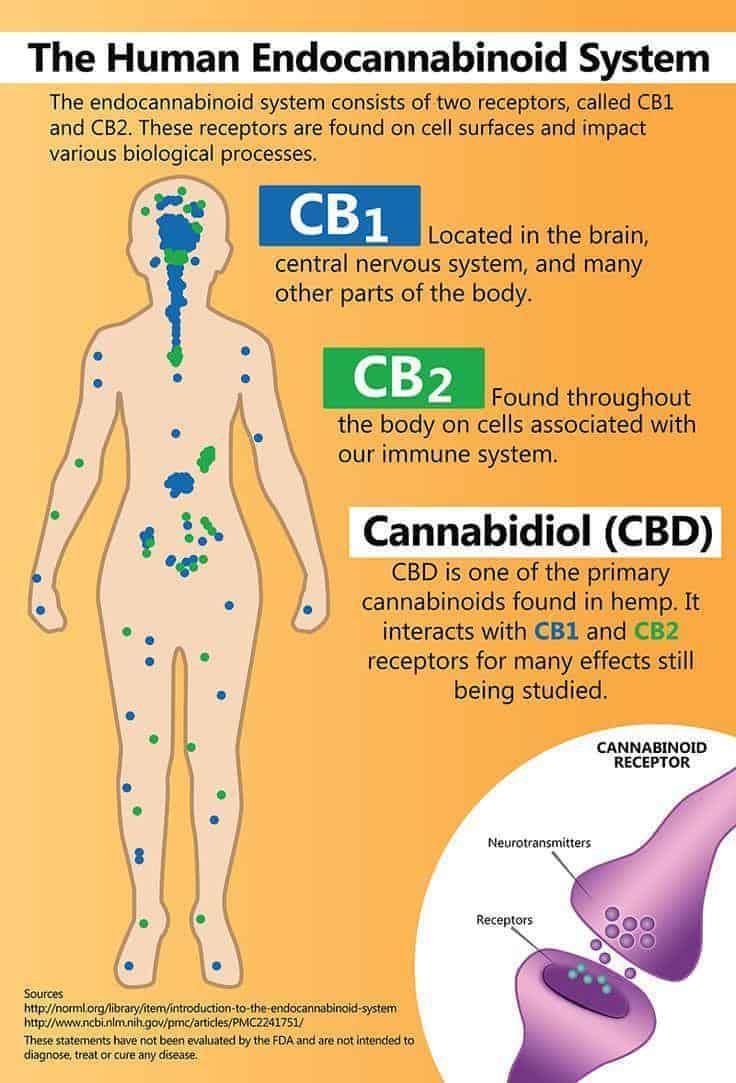 Propriétés des cannabinoïdes