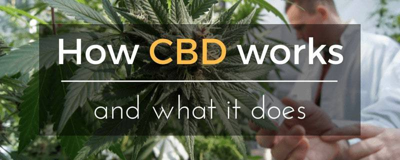 Comment fonctionne CBD