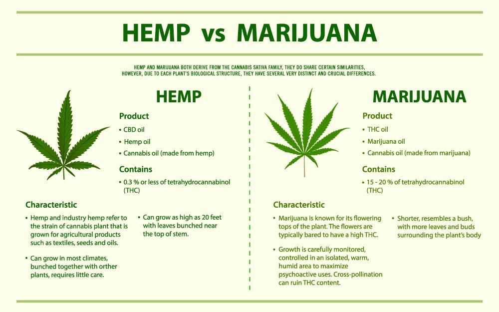 Chanvre Vs. Marijuana
