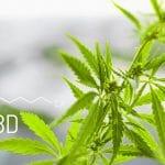 Pourquoi est-il important d'utiliser le CBD contenu dans le cannabis?