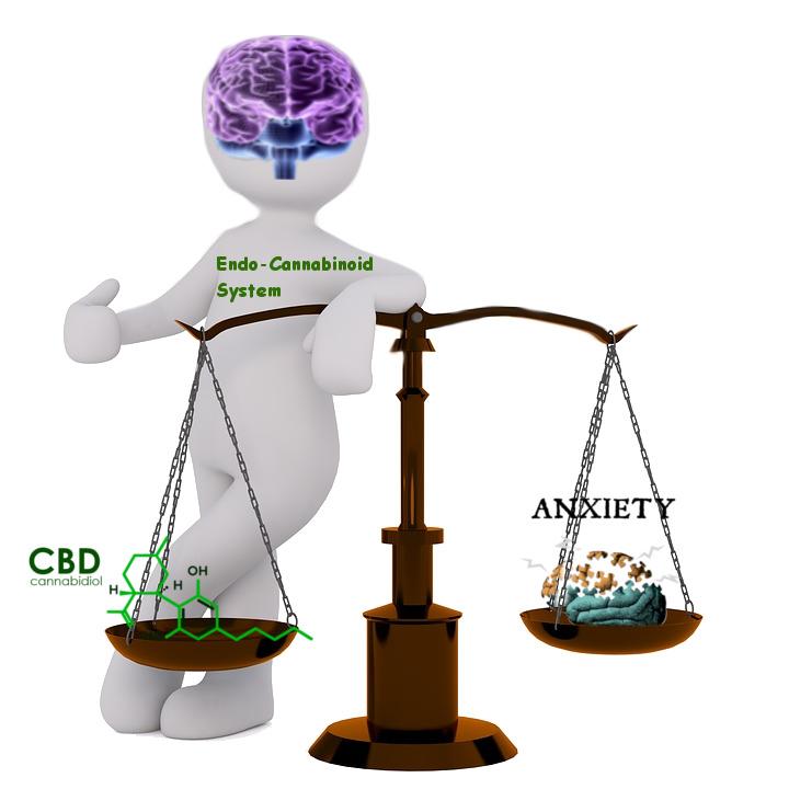 """Endocannabinoïde-Système-CBD-Cannabidiol-naturel-anxiété-soulagement-xanax-alternative-remède-option-holistique-1-1 """"class ="""" wp-image-984 """"width ="""" 288 """"height ="""" 288 """"srcset ="""" https://unitedstatescbd.org/wp-content/uploads/2019/07/Endocannabinoid-System-CBD-Cannabidiol-natural-anxiety-relief-xanax-alternative-remedy-option-holistic-1-1.jpg 720w, https : //unitedstatescbd.org/wp-content/uploads/2019/07/Endocannabinoid-System-CBD-Cannabidiol-natural-anxiety-relief-xanax-alternative-remedy-option-holistic-1-1-100x100.jpg 100w, https://unitedstatescbd.org/wp-content/uploads/2019/07/Endocannabinoid-System-CBD-Cannabidiol-natural-anxiety-relief-xanax-alternative-remedy-option-holistic-1-1-375x375.jpg 375w , https://unitedstatescbd.org/wp-content/uploads/2019/07/Endocannabinoid-System-CBD-Cannabidiol-natural-anxiety-relief-xanax-alternative-remedy-option-holistic-1-1-600x600.jpg 600w """"tailles ="""" (largeur max: 288px) 100vw, 288px """"/>   <figcaption>Endocannabinoid-System-CBD-Cannabidiol-natural-anxiete-relief-xanax-alternative-remedy-option-holistic-1-1</figcaption></figure> </div> <p>J'aime visualiser le système endocannabinoïde comme le<br />élastique dans une bande de caoutchouc – Lorsque la bande de caoutchouc est tirée<br />direction, le système endo-cannabinoïde (ou élastique) entre en jeu pour contrer la<br />déséquilibrer et ramener l'élastique à son «état normal».</p> <p>Il existe 2 types courants de récepteurs endo-cannabinoïdes qui<br />activez votre système endocannabinoïde.</p> <p><strong>Récepteurs cannabinoïdes de type 1<br />(</strong><strong>CB1</strong><strong>) –</strong> Les récepteurs CB1 sont<br />pièce critique de notre système nerveux central et sont les plus fortement concentrés<br />dans notre cerveau et notre moelle épinière.</p> <p><strong>Récepteurs cannabinoïdes de type 2<br />(</strong><strong>CB2</strong><strong>)</strong> – Les récepteurs CB2 sont<br />principalement concentrée dans les différentes parties du système immunitaire, les cellu"""