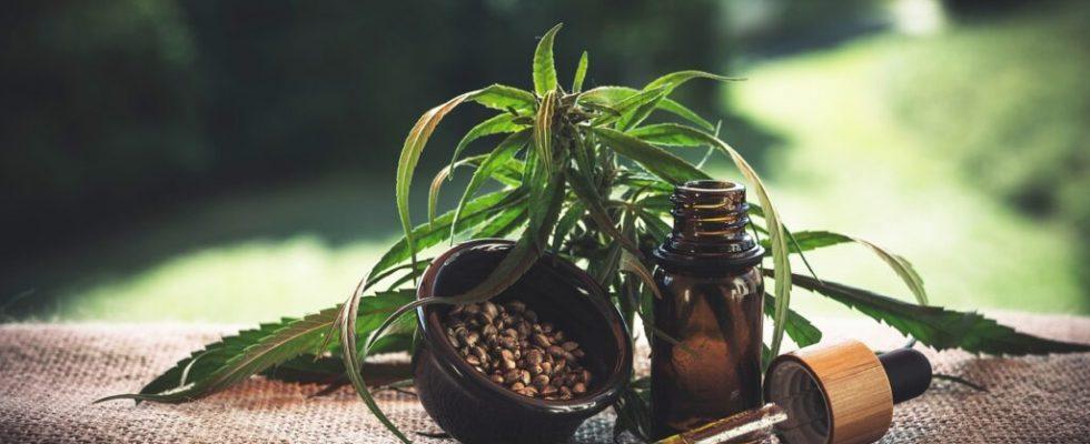 Qu'est-ce que l'huile de CBD et quand l'utiliser ?